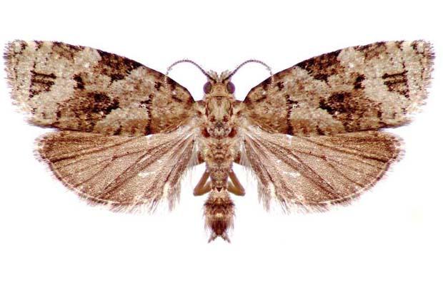 SUN1221N-moth